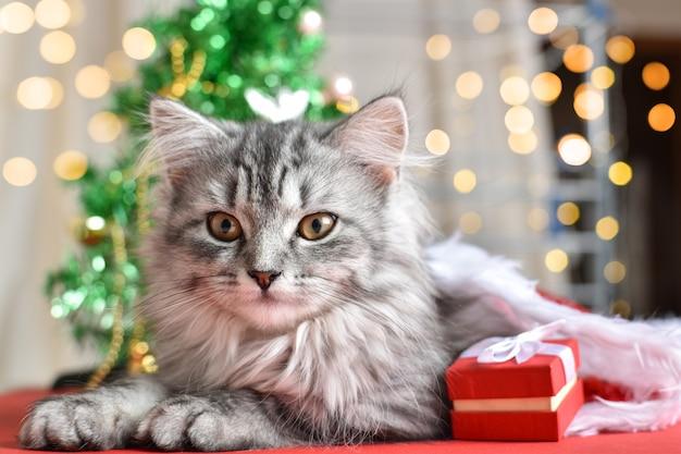 Il gatto è accanto a varie scatole regalo rosse e bianche sullo sfondo dell'albero di natale. spazio per il testo. felice anno nuovo e buon natale.