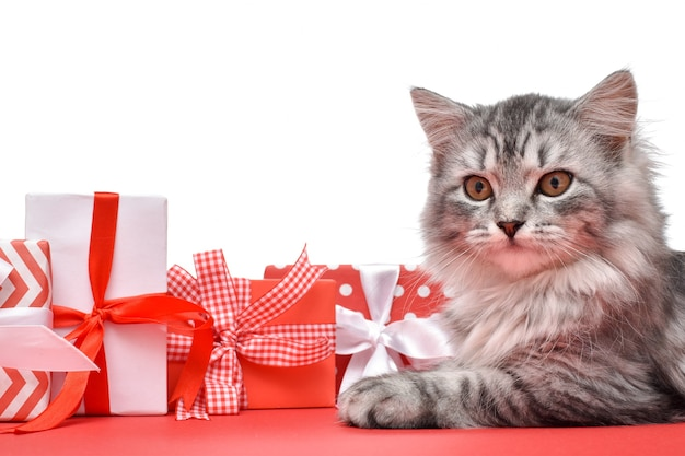 Il gatto è accanto a varie scatole regalo rosse e bianche, isolate su uno sfondo bianco. spazio per il testo. buon anno e natale, giorno di sant'ovalentin. copia spazio. disposizione piana, vista dall'alto.