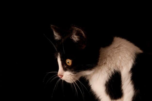 Un gatto isolato su uno sfondo nero