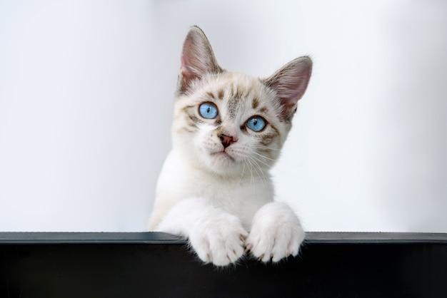 Gattino del gatto che appende sopra il manifesto in bianco nero