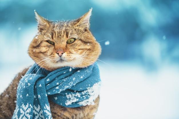 Un gatto con una sciarpa lavorata a maglia si siede nella neve durante una nevicata