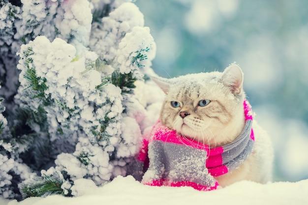 Un gatto con una sciarpa lavorata a maglia siede nella neve vicino all'albero di natale in inverno