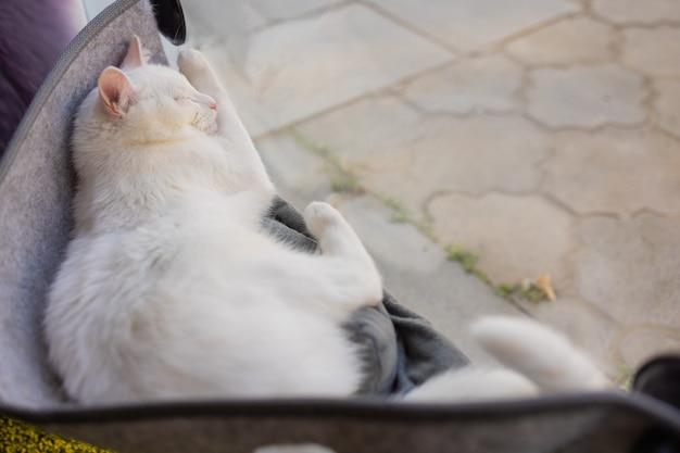 Gatto sdraiato nel letto a parete in vetro a casa