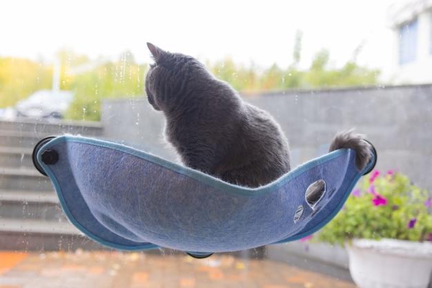 Gatto sdraiato nel letto a parete in vetro a casa.