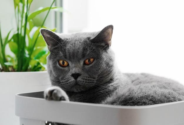 Il gatto si trova in scatola dalla finestra su fondo bianco.