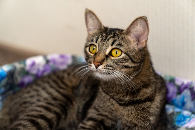 Il gatto si sdraia sulla culla e si muove avanti con gli occhi spalancati
