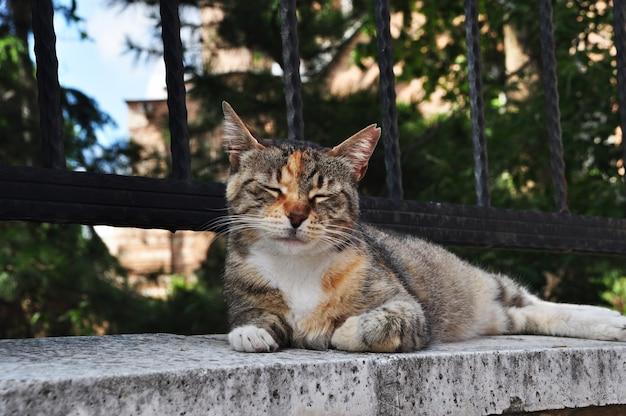 Il gatto giace su un recinto di pietra. il gatto chiuse gli occhi dal sole splendente. estate in città.