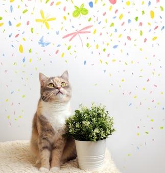 Il gatto guarda le farfalle. foto di un gatto in un interno luminoso. elementi astratti di colore sullo sfondo.