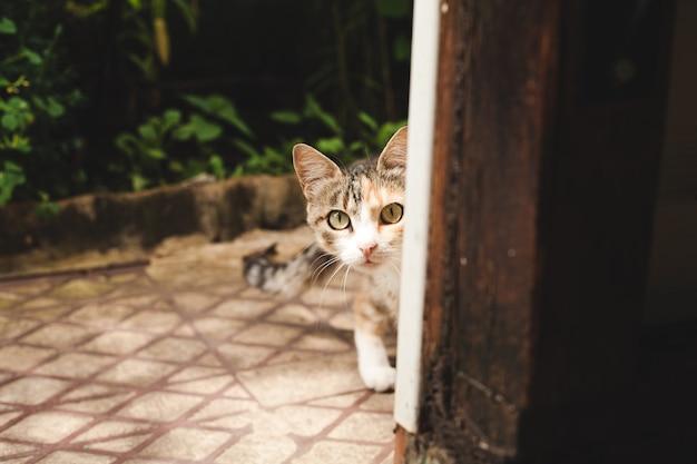 Il gatto guarda fuori dall'angolo, spaventato dalla telecamera.