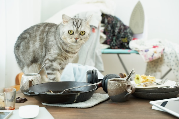 Il gatto guarda con orrore e paura sullo sfondo di disordine, piatti sporchi, pile di vestiti