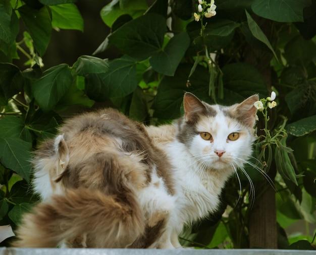 Un gatto sdraiato in giardino, summeã ⺠tempo