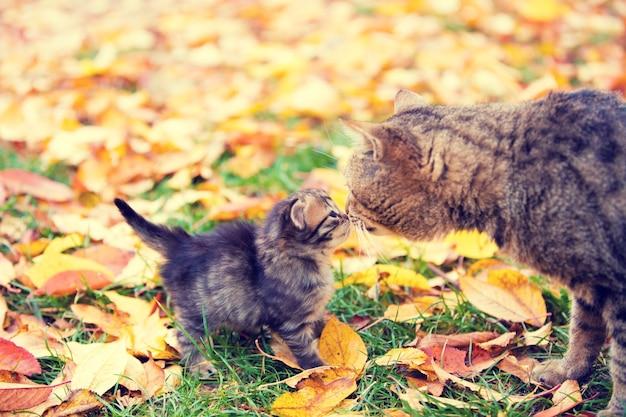 La mamma gatta e il suo gattino si annusano l'un l'altro all'aperto in autunno