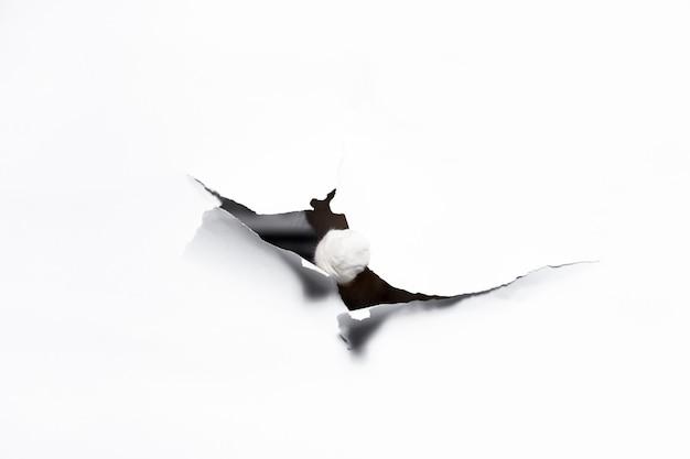 Zampa di gatto attraverso il foro di carta bianca