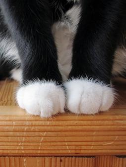 Zampe di gatto tagliare gli artigli graffi di gatto