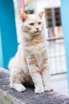 Gatto persiano, adorabile animale e animale domestico in giardino