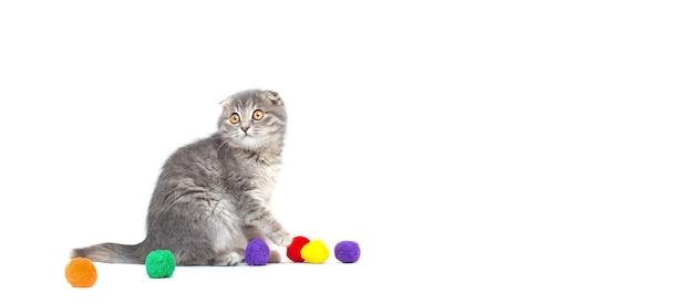 Gatto che gioca con una palla. isolato