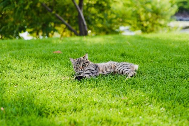 Gatto che gioca con un topo.