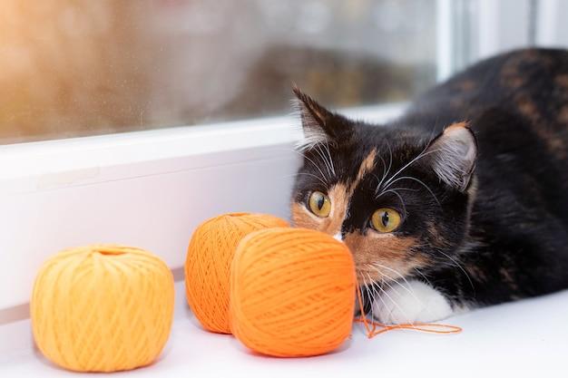 Un gatto gioca con un gomitolo di filo giochi di animali filo per maglieria giocattoli pubblicitari per gatti pubblicità di fili per maglieria bella foto di un gatto foto per prodotti stampati