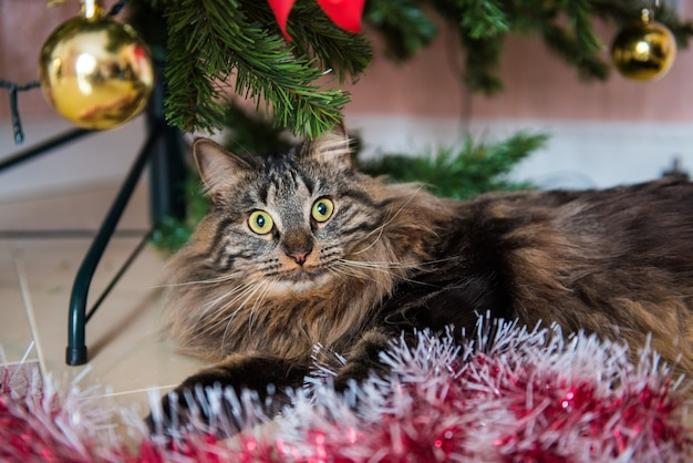 Il gatto gioca con i giocattoli dell'albero di natale.