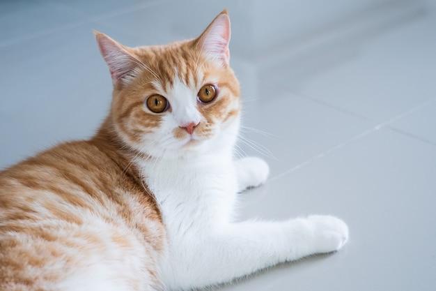 Gatto che riposa a casa, al coperto