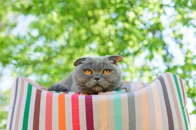 Gatto che riposa su un lettino fuori sotto un albero