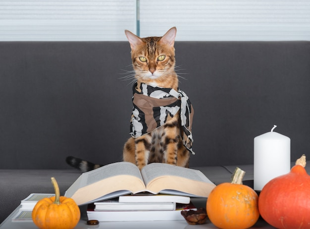 Gatto in una sciarpa in una stanza con un libro aperto, una candela e zucche