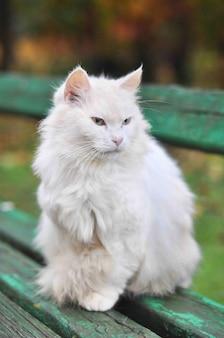 Il gatto si siede su una panchina in autunno