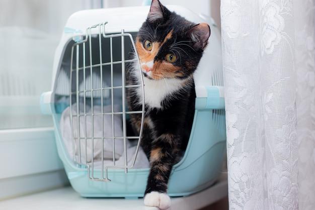Il gatto si siede su una navicella per animali. un animale domestico. trasporto di animali. trasporto di animali. gatto tartarugato adulto.