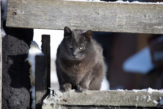 Il gatto si siede su una recinzione nel villaggio. foto di alta qualità
