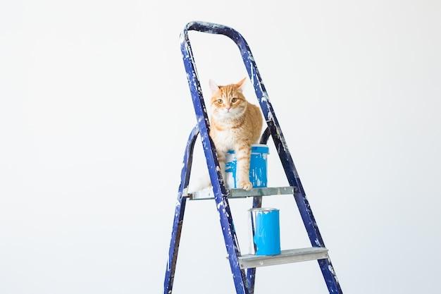 Il gatto si siede sulla scala a pioli