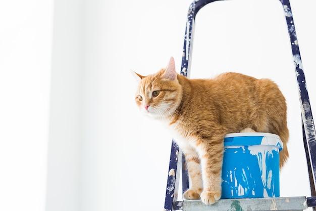 Il gatto si siede sulla scala a pioli.