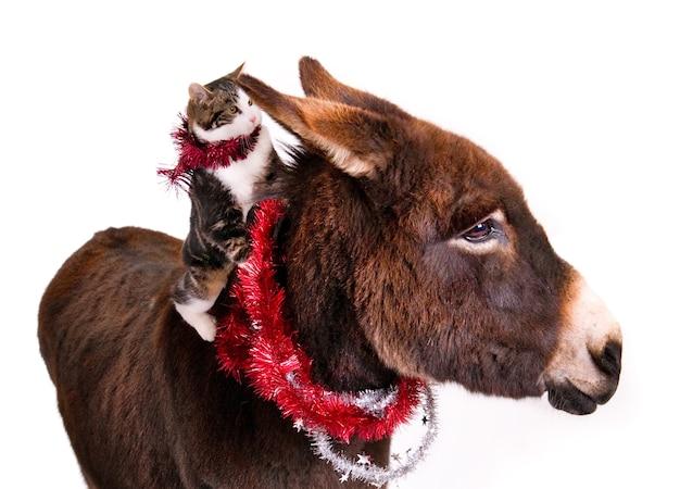 Gatto seduto sul dorso di un asino, entrambi decorati con ghirlande natalizie.
