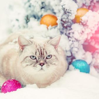 Gatto seduto nella neve vicino all'albero di abete con decorazioni natalizie.