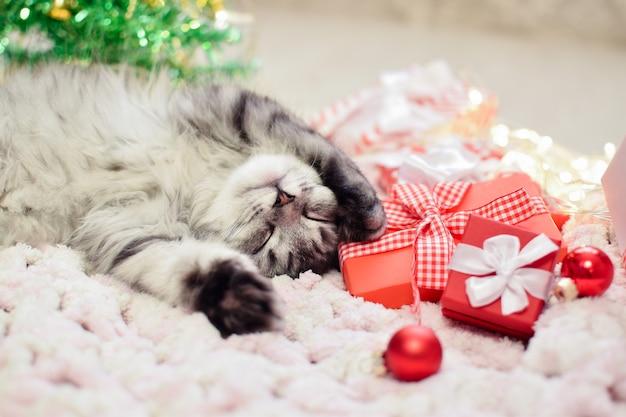Un gatto dorme su una coperta sullo sfondo di un albero di natale sfocato