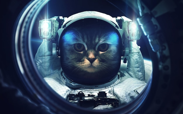 Gatto alla passeggiata nello spazio