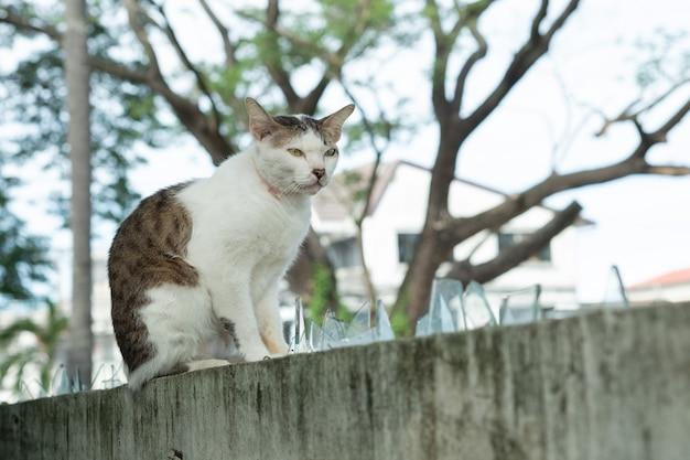 Gatto in piedi sul muro, animale domestico