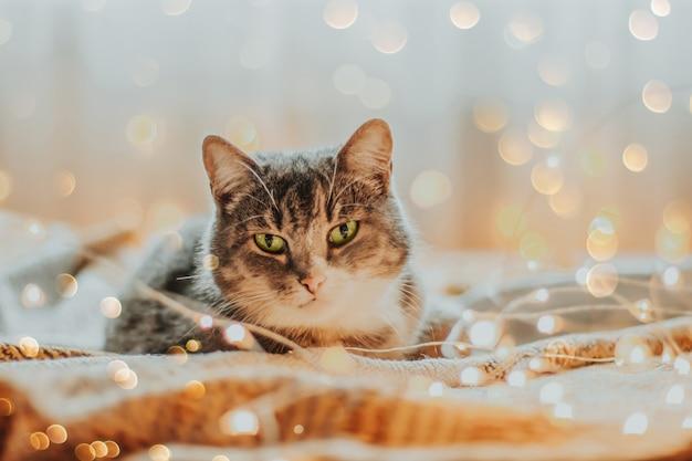 Gatto circondato da luci di natale