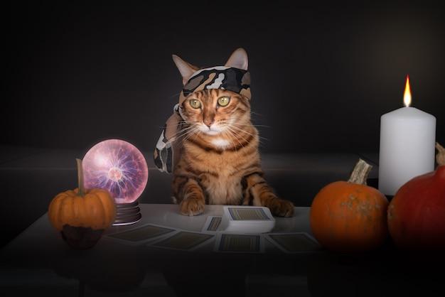 Lettore di tarocchi gatto con carte dei tarocchi. tarocchi a faccia in giù sul tavolo vicino a candele accese e una sfera di cristallo.