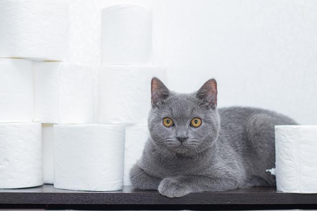 Gatto e carta igienica. il panico generale sullo stock di carta. la mancanza di carta igienica.