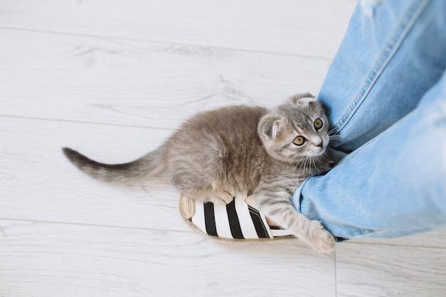 Gatto che cerca di arrampicarsi sulla gamba