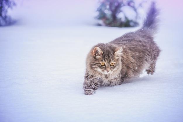 Gatto che cammina all'aperto nella neve profonda in inverno