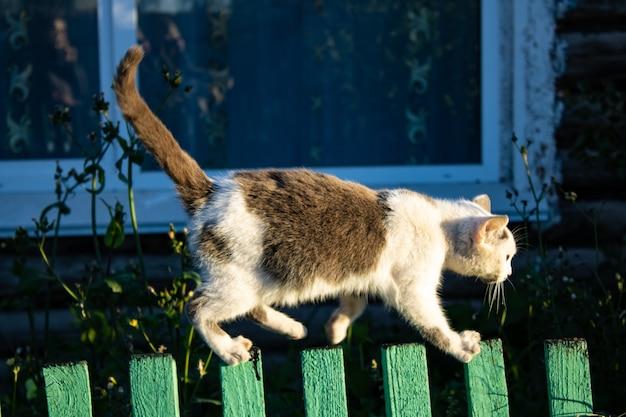 Un gatto cammina su una staccionata di legno in un giorno d'estate il gatto si intrufola lungo la staccionata