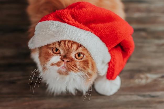 Gatto che indossa cappello rosso di natale