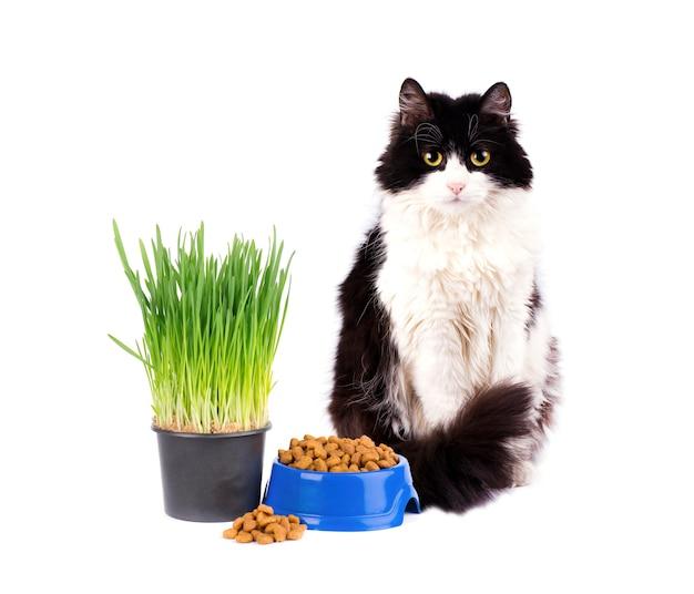 Gatto con la ciotola blu di alimento asciutto e di erba verde isolata su fondo bianco