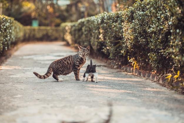 Gatto con simpatico gattino nel parco.