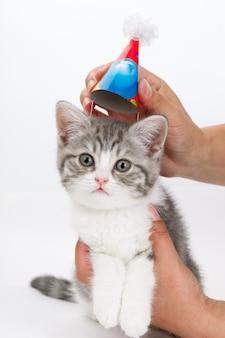 Gatto con berretto festivo in testa nelle mani dell'uomo