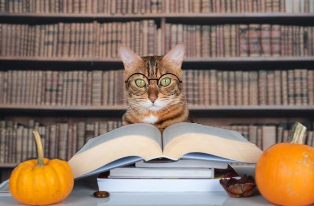 Gatto con gli occhiali vicino a un libro aperto in una biblioteca decorata con zucche