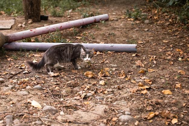 Gatto con la preda tra i denti. dopo aver cacciato ho catturato un uccello nel cortile