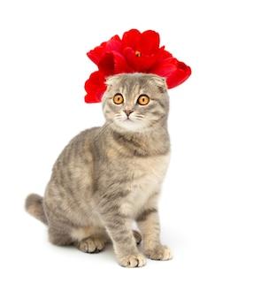 Gatto con una corona di fiori rossi isolato su sfondo bianco