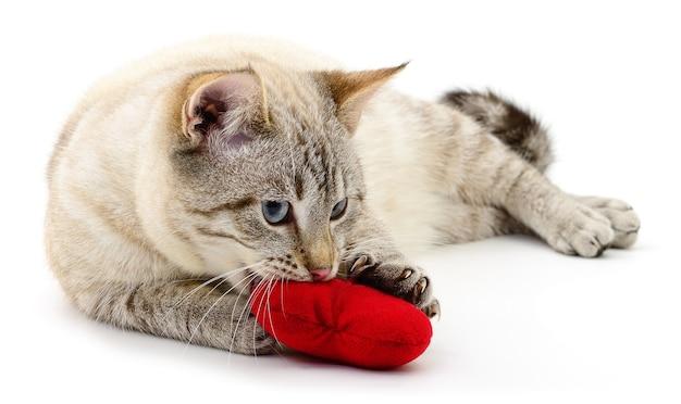 Gatto con cuore rosso di san valentino